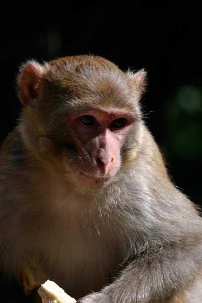 070709_nickcatt-monkey0