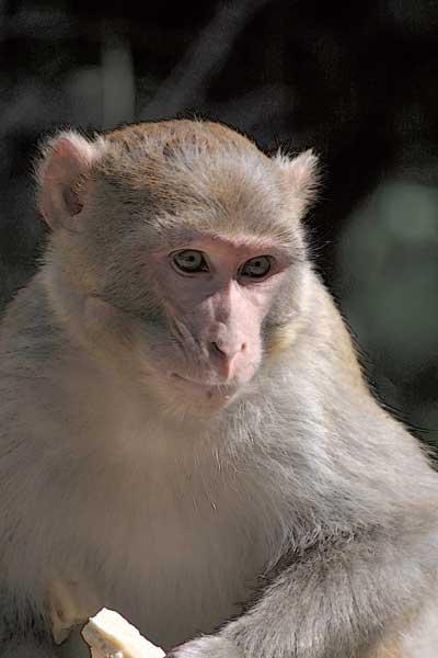 070709_nickcatt-monkey1