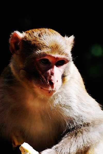070709_nickcatt-monkey2